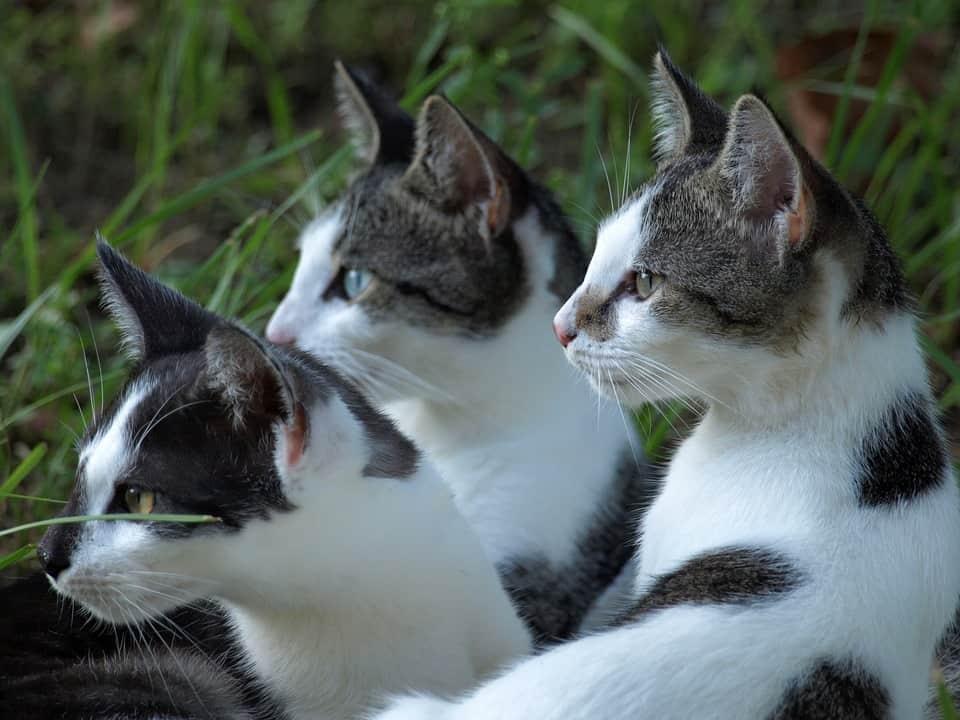 Katten vlekken zwart wit