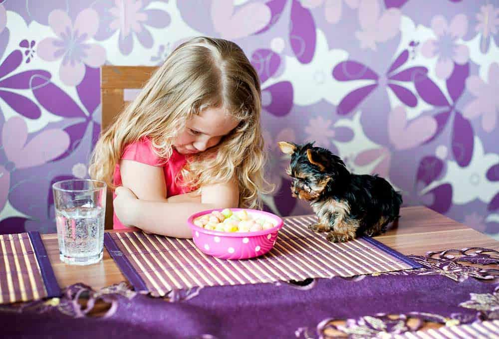 eten hond kinderen moeilijke eters