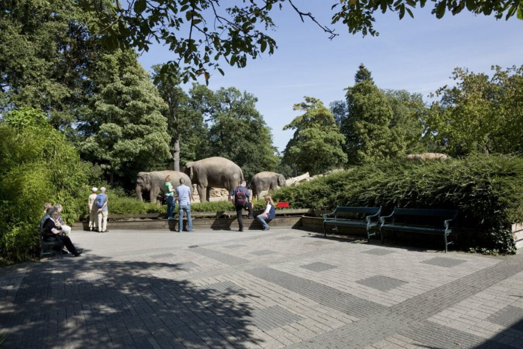 Dierenpark Emmen Olifanten